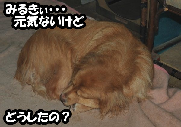 DSC_3169.jpg
