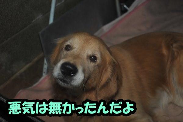 DSC_3198.jpg