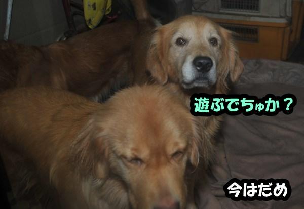 DSC_5599.jpg