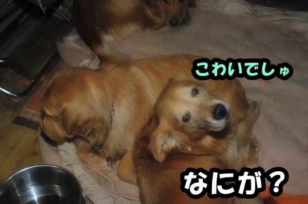 DSC_8815_20130205225911.jpg