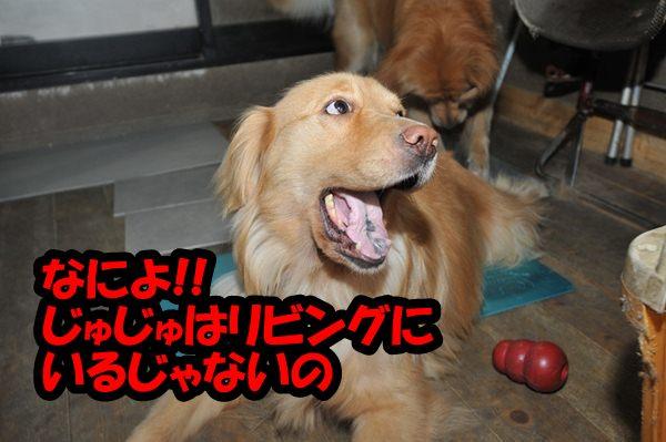 DSC_9088_20120908230617.jpg