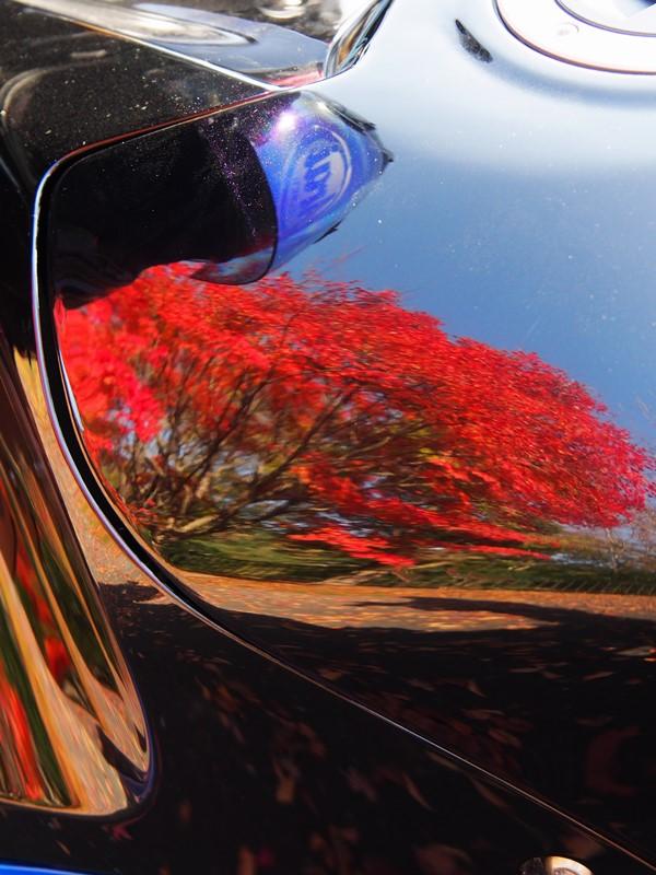 タンクの紅葉