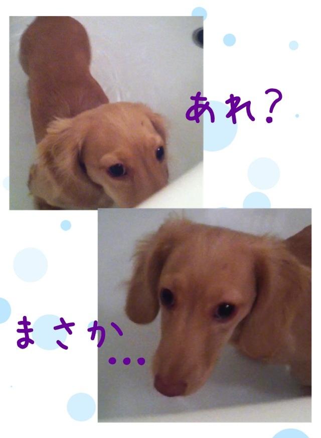image_20130219161105.jpg