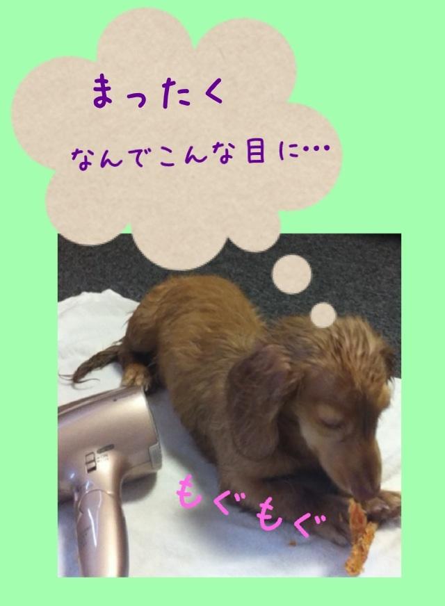 image_20130219161106.jpg