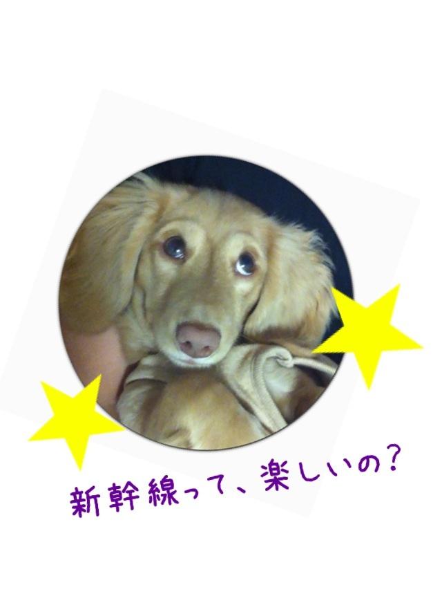 image_20130306214624.jpg