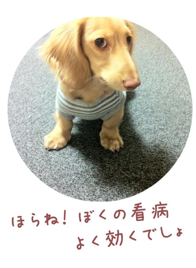 image_20130324221141.jpg