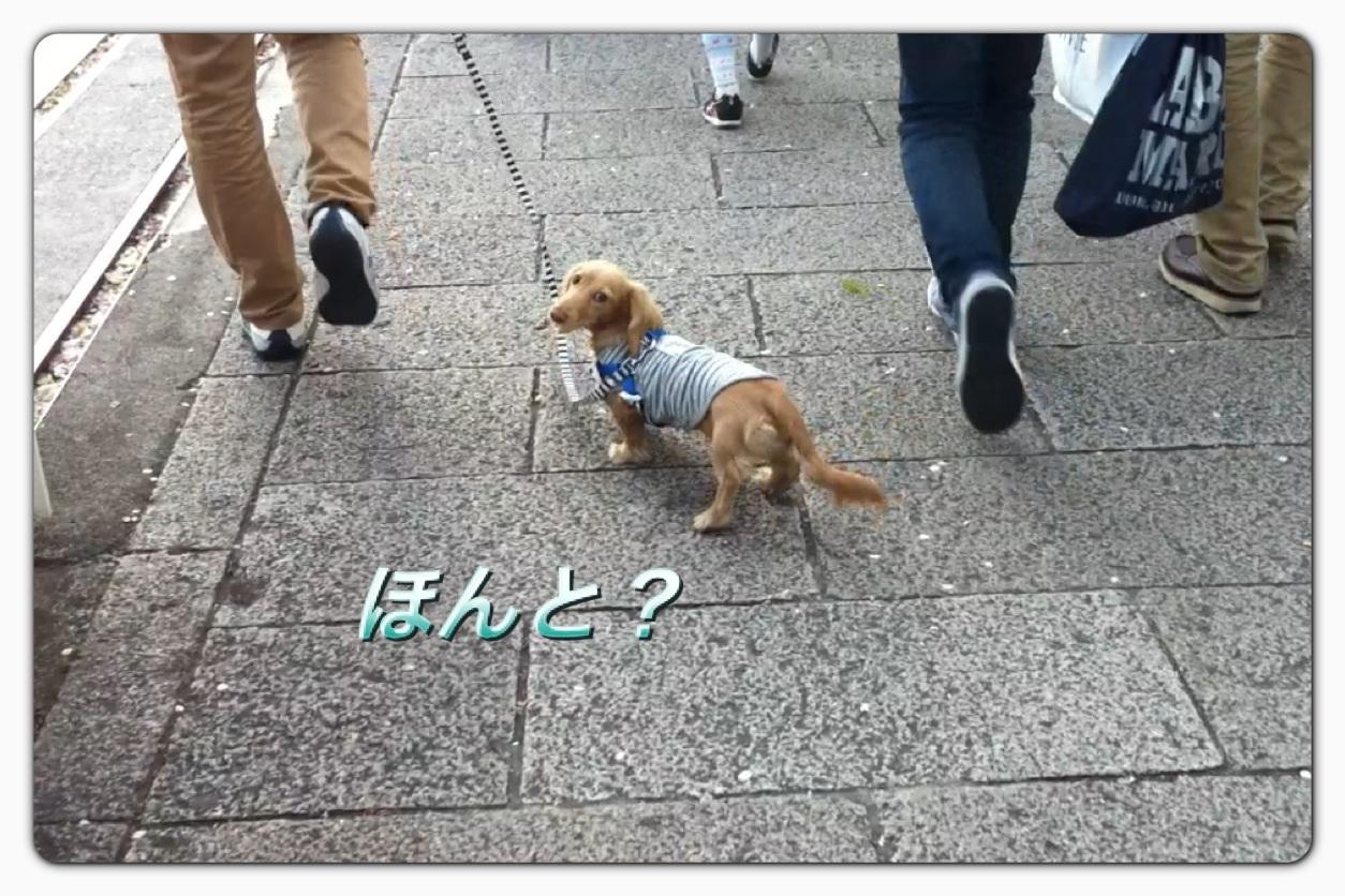 image_20130406043206.jpg