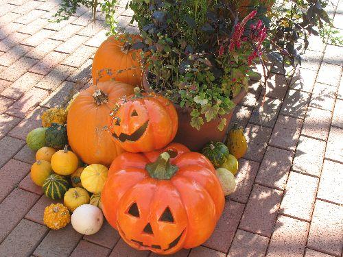 IMG_1084かぼちゃ1