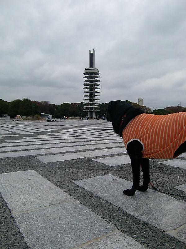 091112komazawa