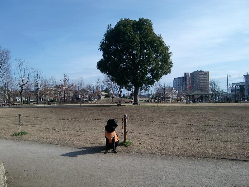 100209sakura2