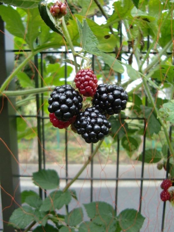 110720blackberry