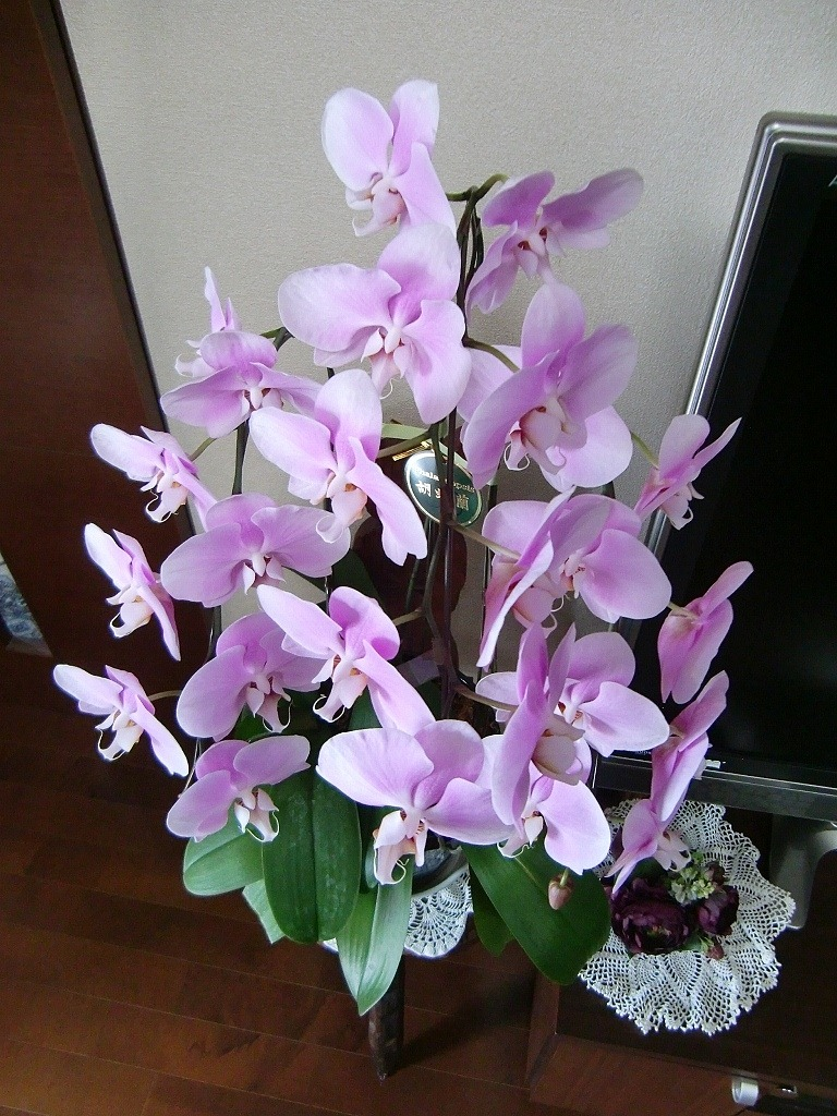 130110orchid