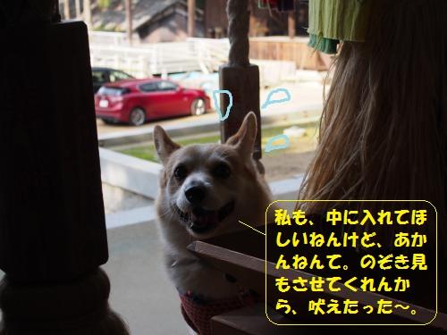 PB170136_convert_20141118000122.jpg