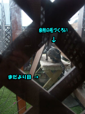 201209032114515df.jpg