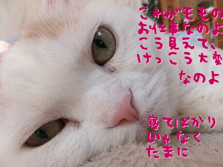 fc2_2013-03-14_13-53-36-174.jpg