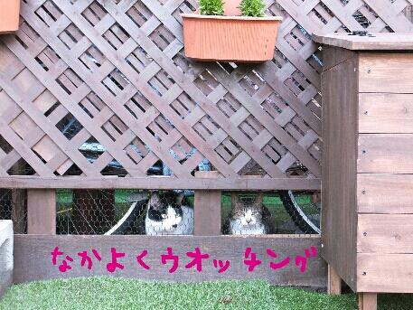 fc2_2013-05-24_12-09-47-436.jpg