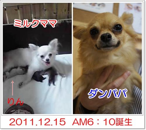 201212151104137e2.jpg