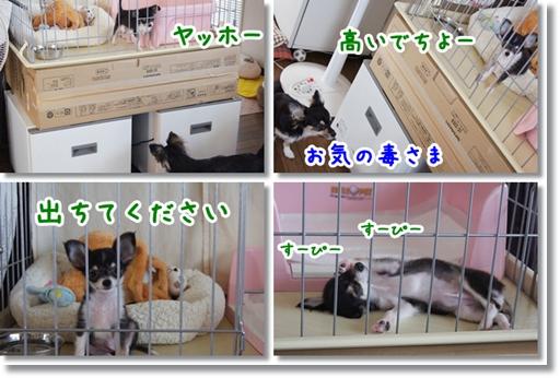 2013042510192173a.jpg