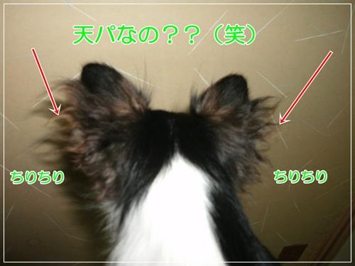 GEDC0070.jpg