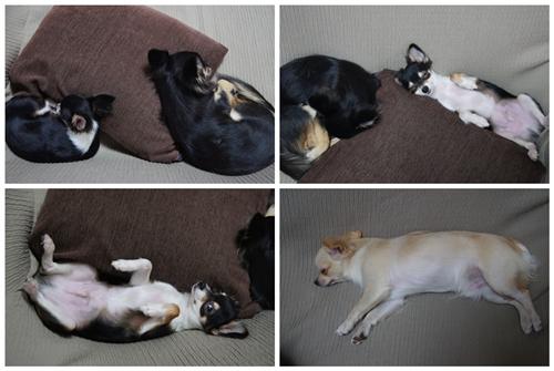 cats1002-6.jpg