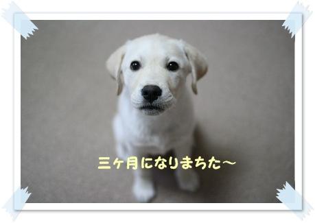 20120604182501987.jpg