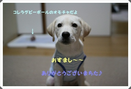 20120617215730089.jpg