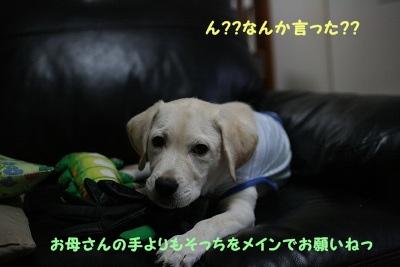201206201944576cd.jpg