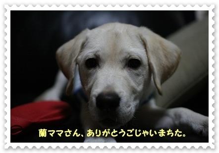 2012062120320074b.jpg