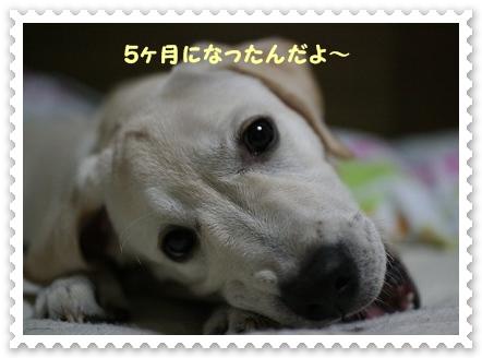 2012080521075759c.jpg