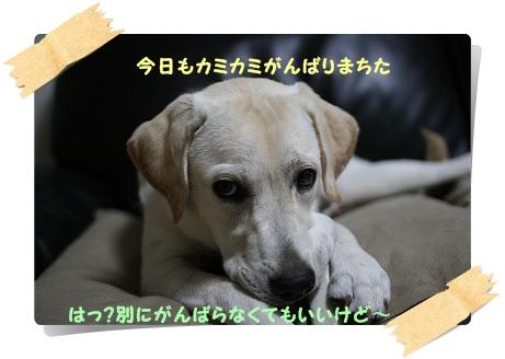 20120920204432ef6.jpg