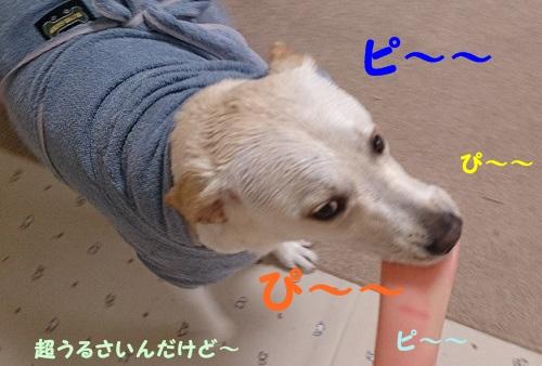 201306111948022da.jpg