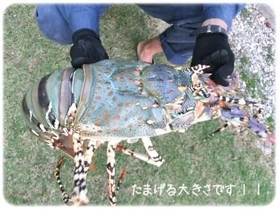 2014_11130016.jpg