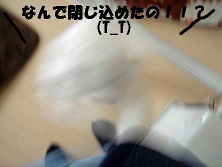 DSC01689.jpg