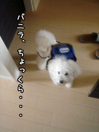 DSC05788.jpg