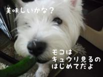 fc2blog_20120709101754d7c.jpg