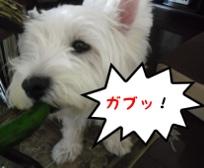 fc2blog_2012070910180773e.jpg