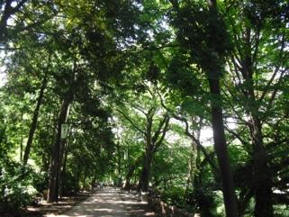 fc2blog_20120910091047536.jpg