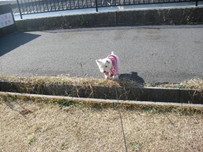 fc2blog_20121208185638d11.jpg