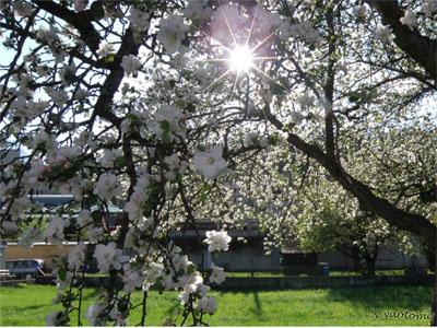 seasons_2012_spring3.jpg
